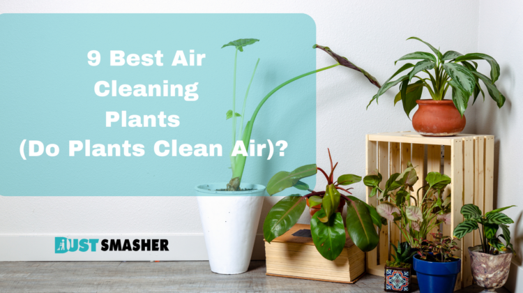 9 Best Air Cleaning Plants (Do Plants Clean Air)?