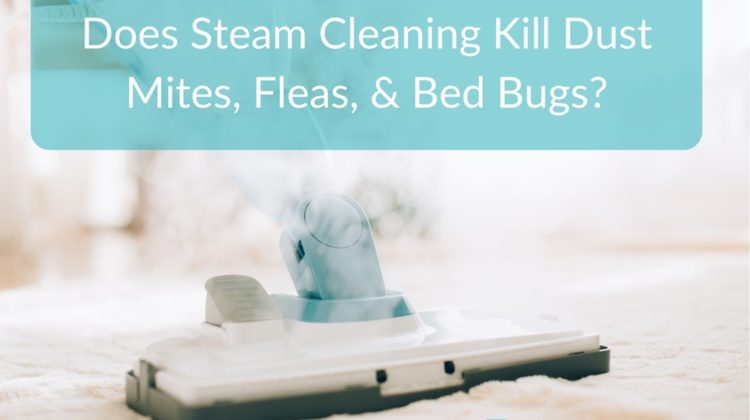 Does Steam Cleaning Kill Dust Mites, Fleas, & Bed Bugs?